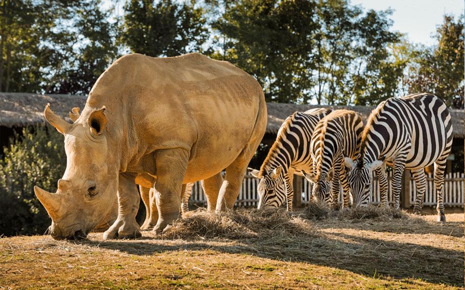 zoo boissière du doré_rhinocéros_zèbre_logement insolite